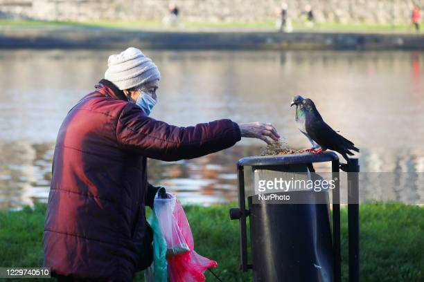 An old woman is feeding pigeons during coronavirus pandemic Krakow Poland on November 11 2020 Tougher measures to battle COVID19 came into effect...