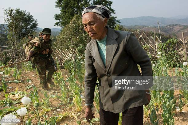 An old woman laments the destruction of her opium field by TNLA soldiers The TNLA started a drug eradication campaign in 2012 destroying opium fields...