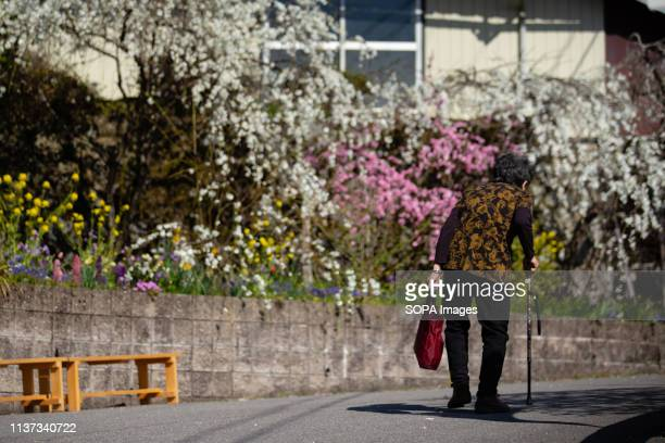 An old woman seen walking by the weeping peach trees Approximately 3000 weeping peaches flourish in the Asahi District's Kaminakacho Toyota Aichi...