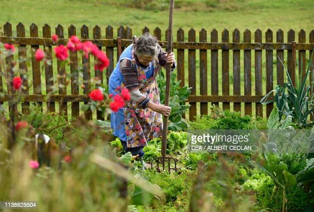 An old woman taking care of her garden in the vicinity of Meran TrentinoAlto Adige Italy