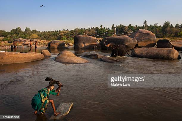 An old woman washing laundry with Lakshmi the holy elephant bathing in the background, in the Tungabhadra river by the village of Hampi in Karnataka,...