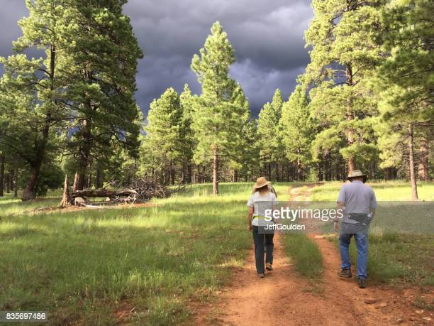couple hiking in a ponderosa pine forest - flagstaff arizona stock pictures, royalty-free photos & images