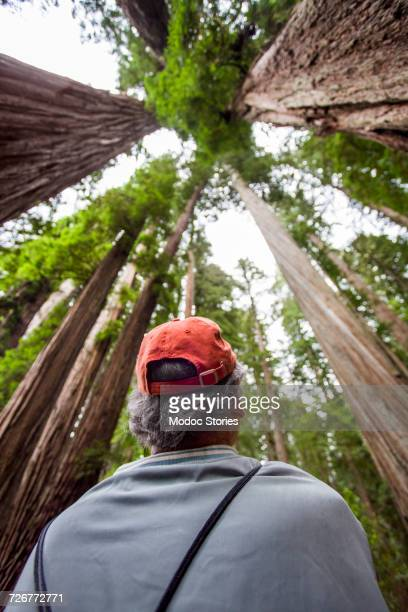 An older man looks up at the towering trees above in Redwood National Park, CA.