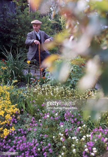 An older village gentleman with his walking stick sitting in a flower garden at Pembridge in England circa June 1966 During the summer of 1966...