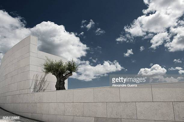 An olive tree sits on a section of the Champalimaud Foundation building in Lisbon.