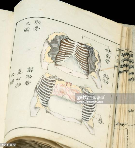 An open book showing two diagrammatic drawings of the human chest from Japanese anatomical atlas Kaishi hen by Shinnin Kawaguchi 1772 Courtesy...