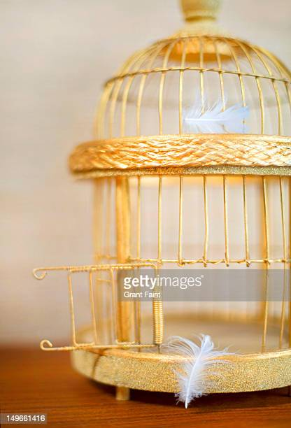 An open, golden bird cage and lost feathers