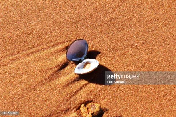 An open shell on the red sand