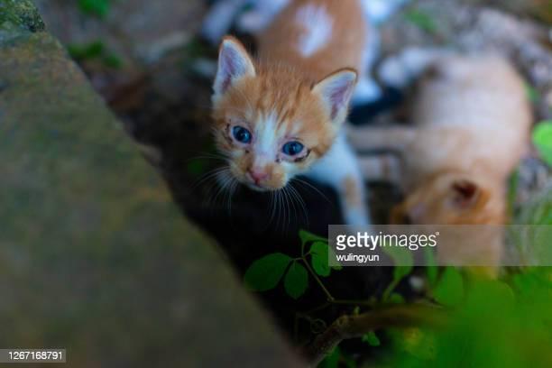 an orange ketten looking at camera - gattini appena nati foto e immagini stock