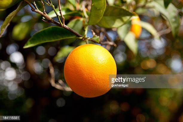 Eine Orange