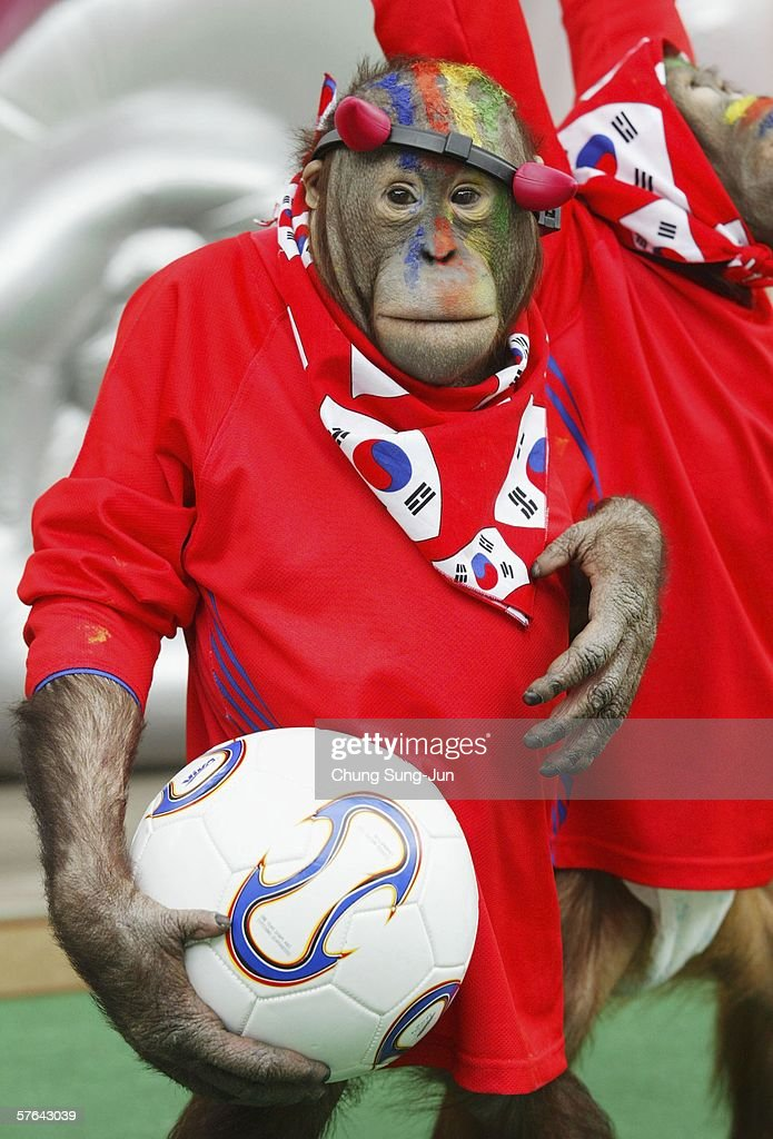 An orangutan dressed as a South Korean soccer fan performs with a football at an animal show to support the South Korean national football team at the 2006 World Cup in Germany on May 18, 2006 in Seoul, South Korea. South Korea have been drawn in World Cup Group G along with France, Switzerland and Togo for tournament in Germany which kick's off on June 9.