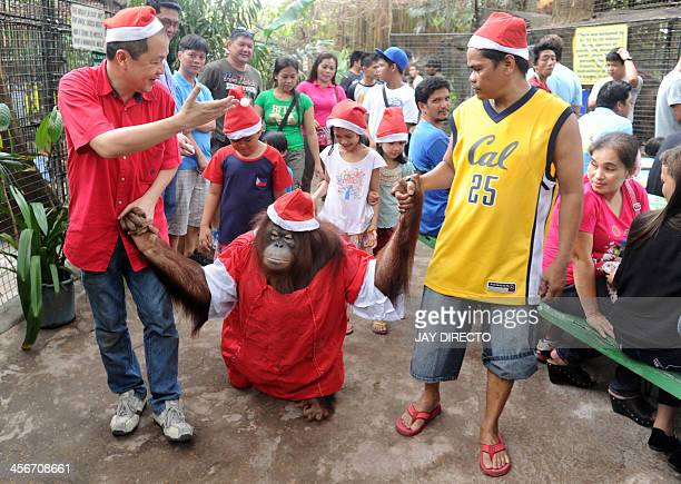 An orangutan named Pacquiao is paraded by zoo owner Manny Tangco at the start of Christmasthemed events at the Malabon Zoo suburban Manila on...