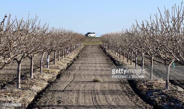 An orchard is seen on the outskirts of Kettleman City in California's San Joaquin Valley on April 2 one of the top agriculture producing counties in...