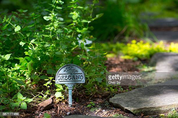 An oregano marker stake in the herb garden is one of several small vignettes in the back yard of Alexandra Risen author of Unearthed TheToronto back...