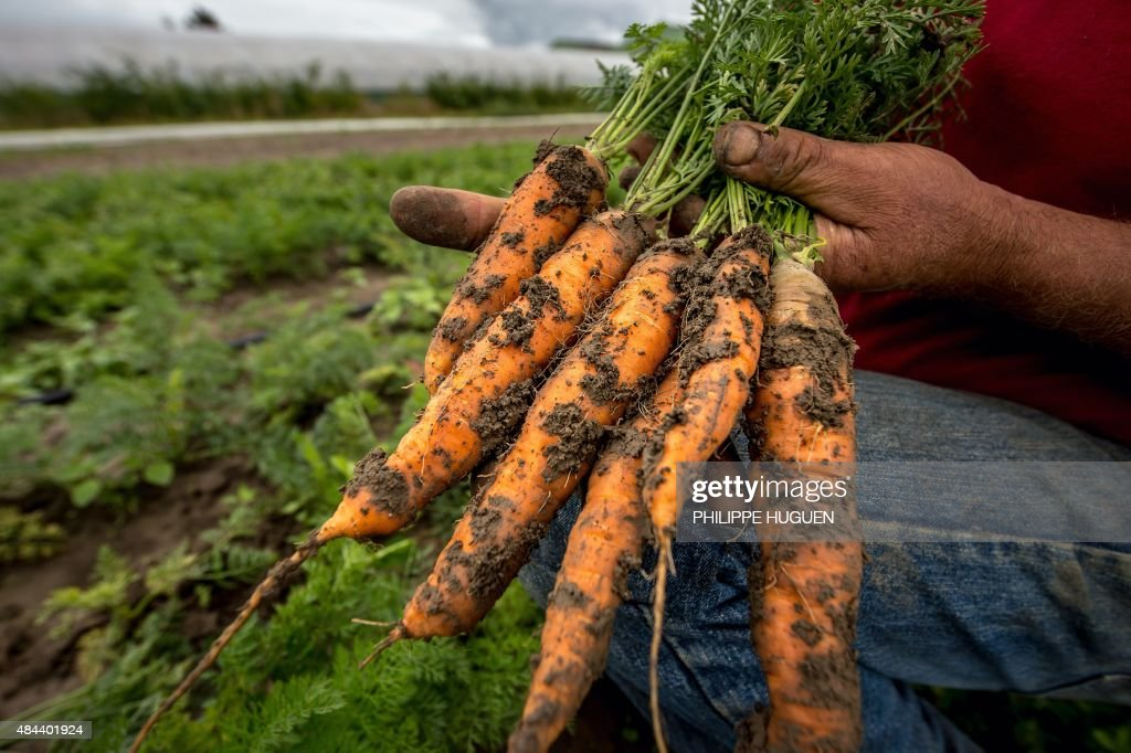 FRANCE-ECONOMY-AGRICULTURE : News Photo