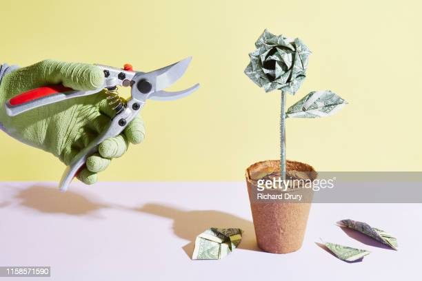 an origami dollar flower is pruned - cutting stock pictures, royalty-free photos & images