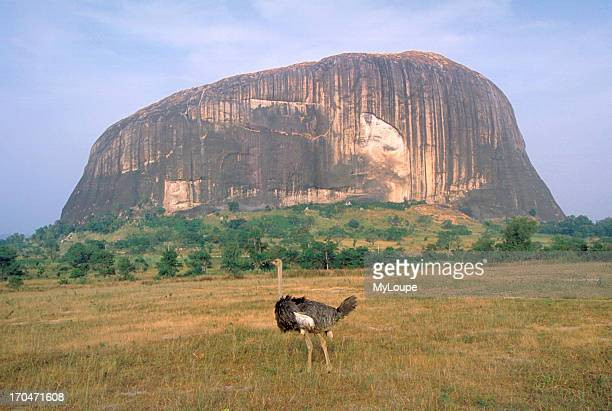 An ostrich at Zuma Rock near Abuja one of Nigeria's most famous landmarks sacred place where Nigerians believe that spirits dwell featured on...