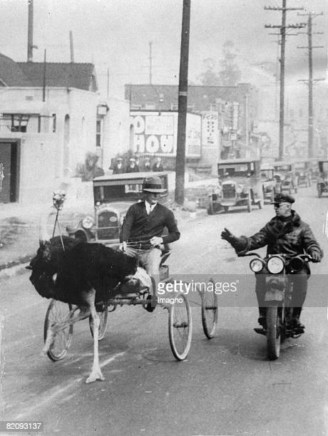 An ostrich carriage beeing stopped by the police for crossing the speed limit, Photograph, Los Angeles, Around 1930 [Ein Strau?en-Kutsche wird von...