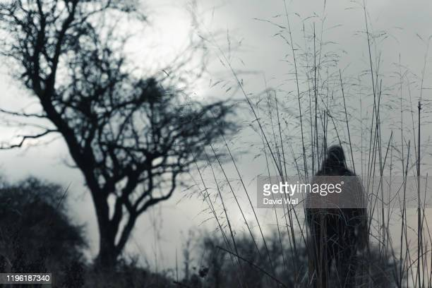 an out of focus hiker next to a tree in the background, with a close up of grasses. with a moody, bleak winters day. - mystery stock pictures, royalty-free photos & images