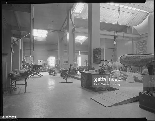 An overall view shows several mounted mammal specimens and a celluloid model of Narwhal in procss in the division of Taxidermy Zoology storage and...