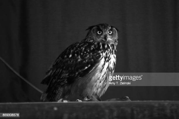 An owl appears on stage during the Twin Peaks UK Festival 2017 at Hornsey Town Hall Arts Centre on October 7 2017 in London England Created by writer...