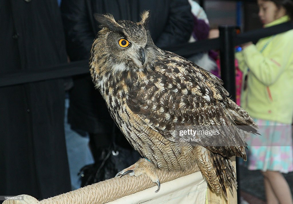 An owl at 'The Birds' Tribeca Drive-In Screening during the 2013 Tribeca Film Festival on April 18, 2013 in New York City.