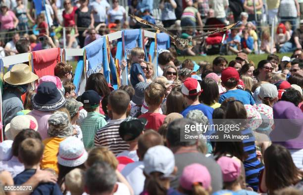 An owl flies over the heads of the audience during a falconry display before the Knights of Royal England performed during a jousting display...