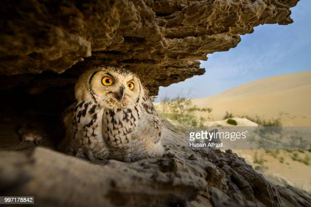 An owl in a hole in a rock.