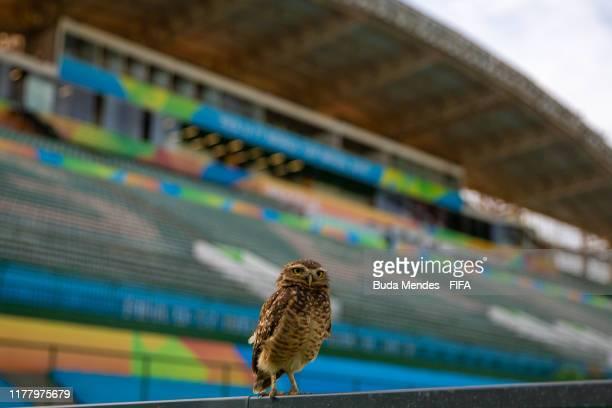 An owl is seen at the Valmir Campelo Bezerrao Stadium ahead of the FIFA U-17 Men's World Cup Brazil 2019 on October 24, 2019 in Brasilia, Brazil.