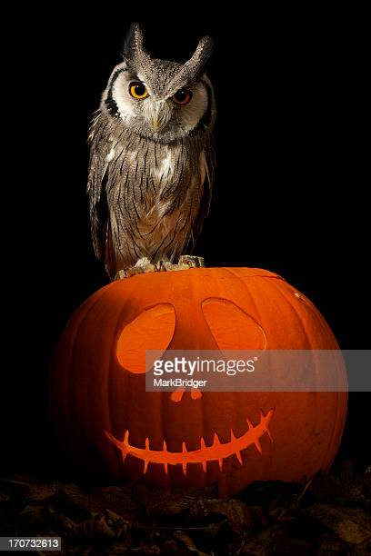 an owl - perching stock photos and pictures