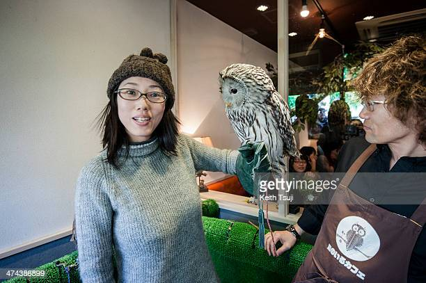 An owl sits on a lady's arm at Torino Iru Cafe on February 23 2014 in Tokyo Japan Located in Kiba Tokyo Torino Iru is a cafe where people can get up...