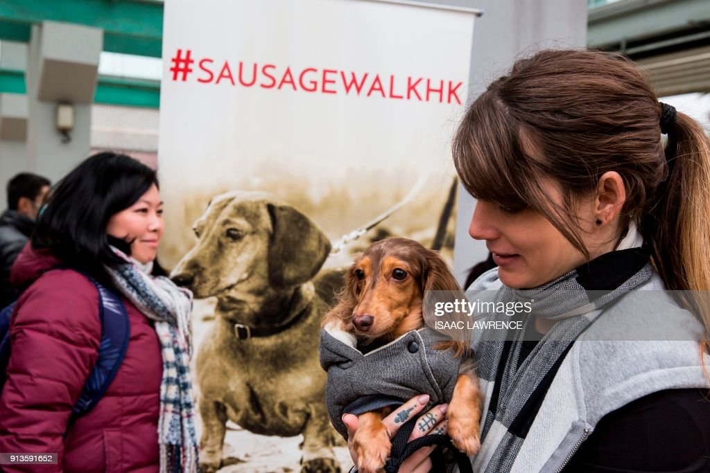 An owner (R) holds her dachhund before taking part in the city's first 'Sausage Walk' in Hong Kong on February 3, 2018. In a city that likes to dress up its dogs, 50 dachshunds gathered in Hong Kong on February 3 wearing everything from patterned winter jumpers to dapper tweed. /