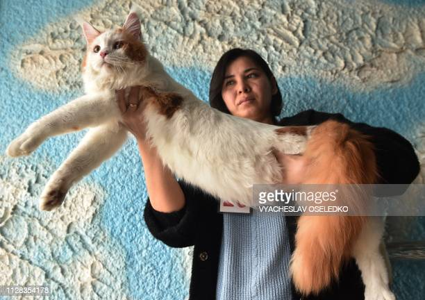 An owner poses with her Maine Coon cat during a cat exhibition in Bishkek on March 2, 2019. - Cat lovers from Kyrgyzstan, Kazakhstan and Uzbekistan...