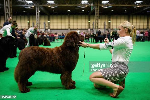 An owner sits with her Newfoundland dog during a competition round at the Crufts dog show at the NEC Arena on March 8 2018 in Birmingham England The...
