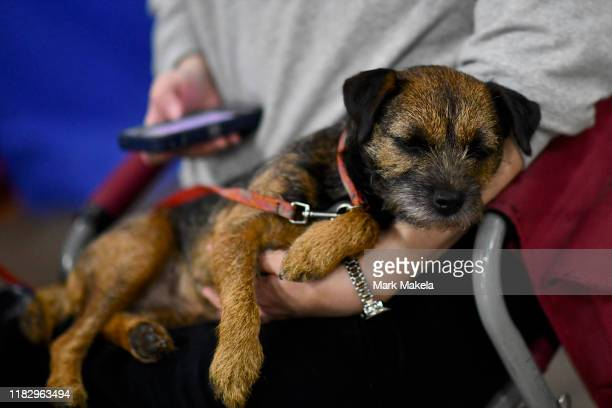 An owner uses an iPhone as a dog sleeps on her lap during the National Dog Show held at the Greater Philadelphia Expo Center on November 16 2019 in...