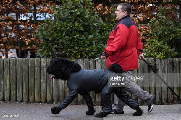 An owner walks with a Portuguese Water Dog as they arrive at the Crufts dog show at the NEC Arena on March 8 2018 in Birmingham England The annual...
