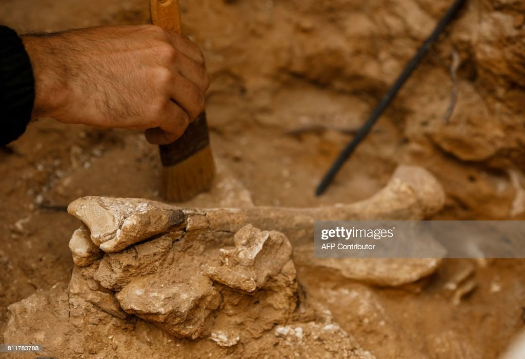 An rchaeologist cleans a bone with a brush in the dig of 'Cueva Fantasma' (Ghost cave), in the archaeological site of the Atapuerca mountain range, province of Burgos on July 10, 2017. Fossils and stone tools of the earliest known hominids in Europe, dating to between 780,000 and 1 million years ago, were discovered at the Atapuerca's Archaeological site which was added to the UNESCO list of World Heritage Sites in 2000. In 2007 the archaeological team found in the caves of the Elephant, a jaw and a human phalanx dating back 1.2 million years and considered to be the remains of the 'oldest European'. /