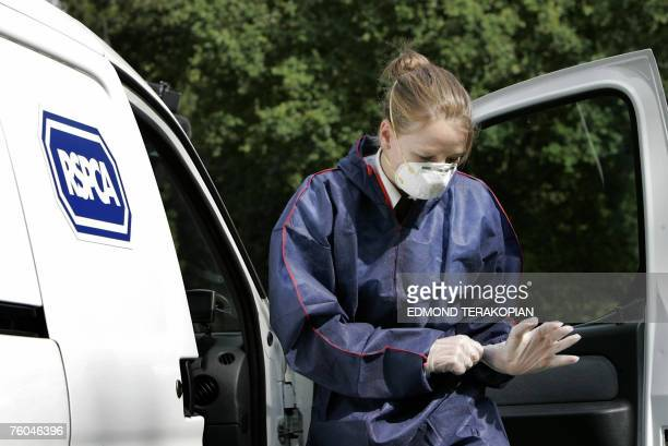 An Royal Society for the Prevention of Cruelty to Animals team arrive at Hunts Hill Farm in the area effected by the foot and mouth disease in...