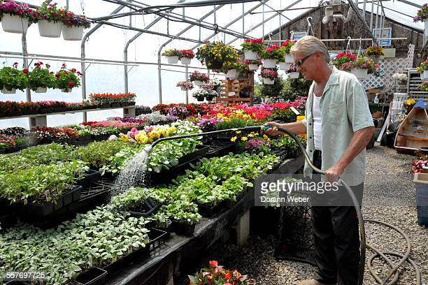 An senior man happily waters herbs and flowers with a hose in a greenhouse Chore
