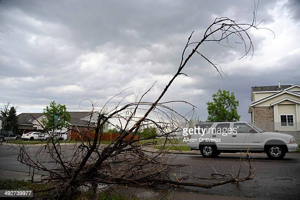 An SUV drives by a downed tree after hail pounded the area near East 26th Avenue and East 26th Place A hail storm hit the Denver metro area on...