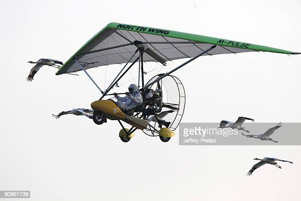 An Ultralight aircraft leads a pack of endangered Whooping cranes on a practice run in the Necedah National Wildlife refuge September 18 2008 in...