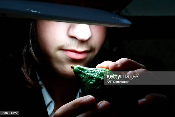 TOPSHOT An ultraOrthodox Jewish boy inspects a citron one of four plant species to be used during the celebration of Sukkot the feast of the...