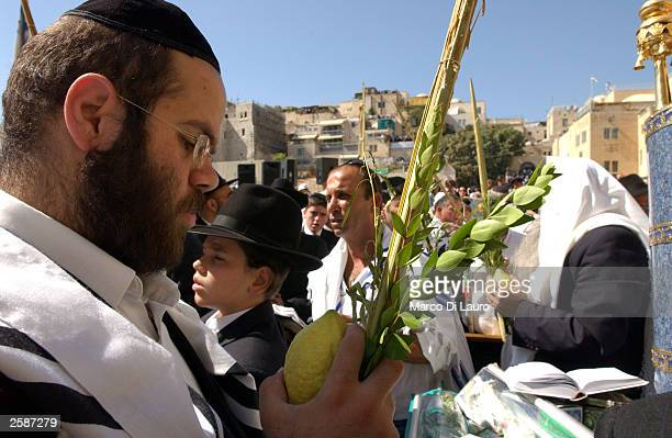 An Ultra-orthodox Jewish man prays as he holds a citron, bunches of myrtle branches and leaves of olive and palm tree during the ritual of the...
