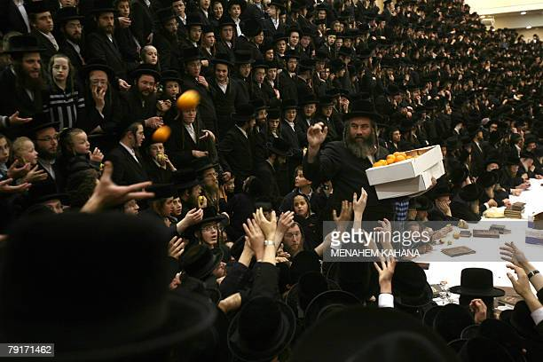 An ultraOrthodox Jewish Rabbi distributes fruit during a celebration by the Belz Hasidim of the Jewish feast of 'Tu Bishvat' or Tree New Year 22...