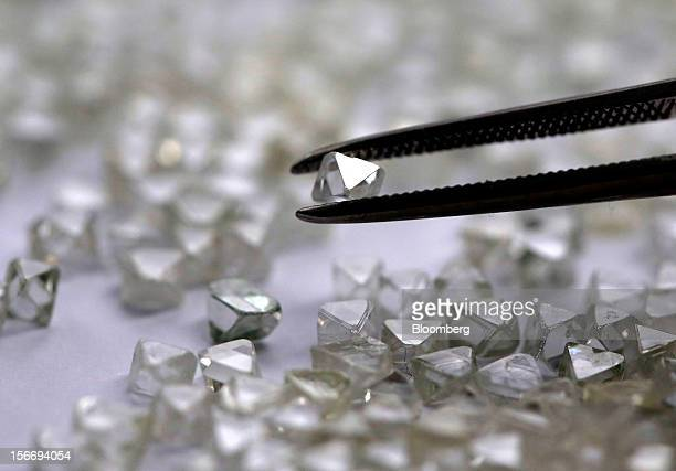 An uncut diamond is selected from a collection of colorless and colored diamonds from a sorting table at the De Beers office in London UK on Friday...