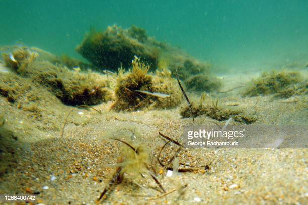 an underwater photo of the seabed - ocean floor stock pictures, royalty-free photos & images