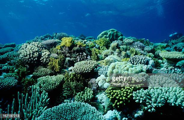 An underwater picture of a coral garden