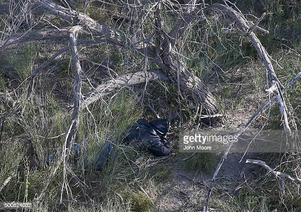 An undocumented immigrant tries to hide from U.S. Border agents in thick brush near the U.S.-Mexico border on December 10, 2015 at La Grulla, Texas....