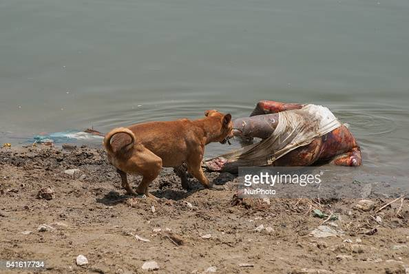 ganges river dead bodies - 594×398