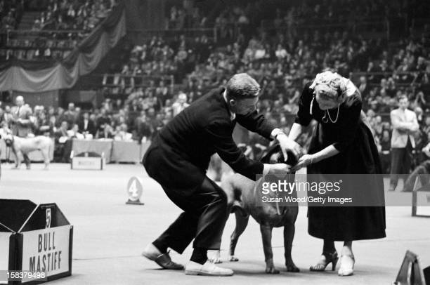 An unidentified man and a female woman judge hold a dog at the Westminster Kennel Club Dog Show in Madison Square Garden New York New York February...